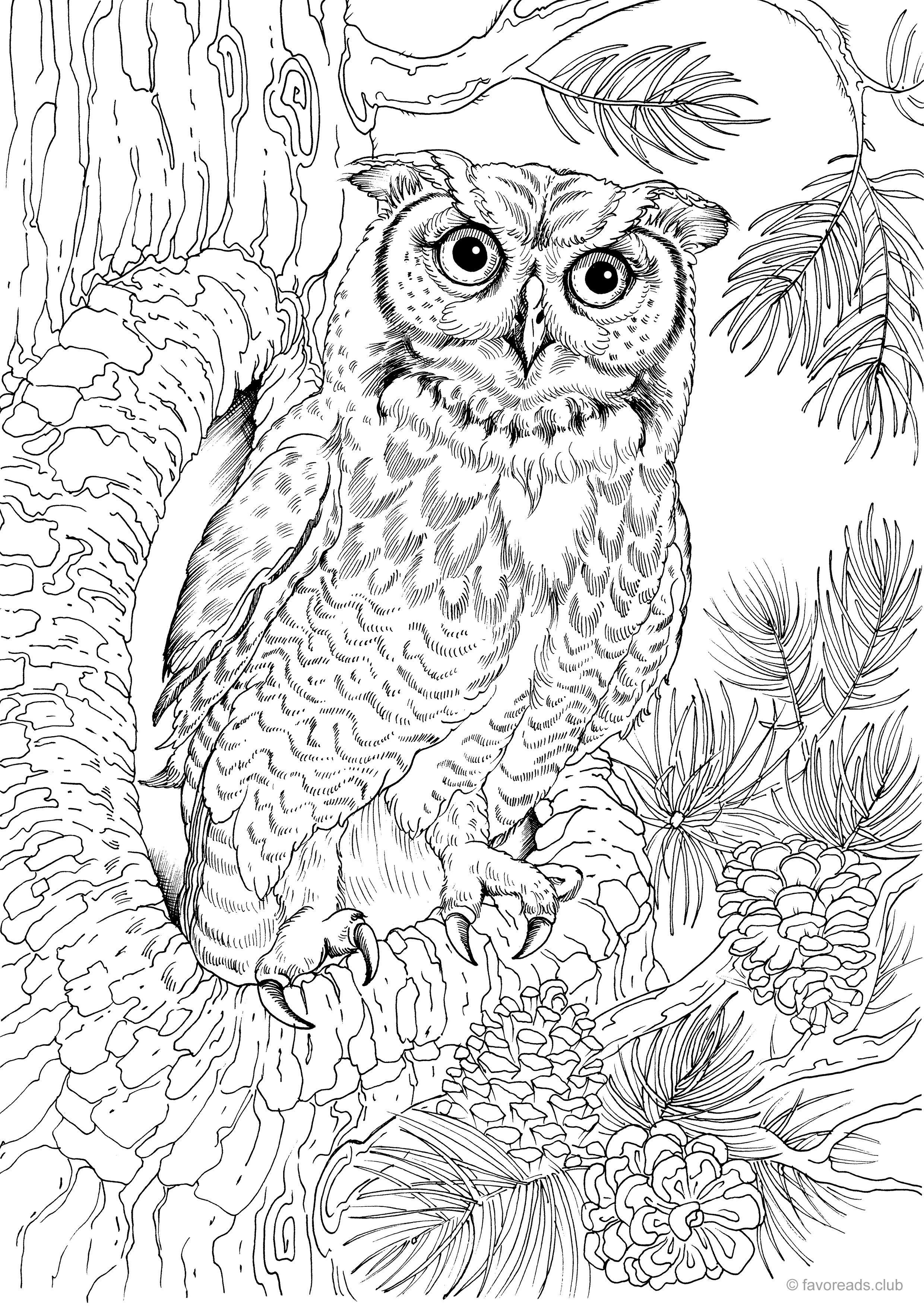 Pin By Amanda Kay On Coloring Pages Owl Coloring Pages Bird Coloring Pages Animal Coloring Pages