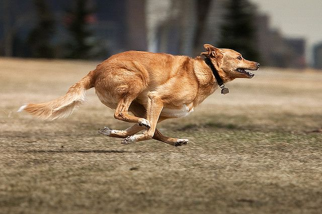 Speed Racer!!