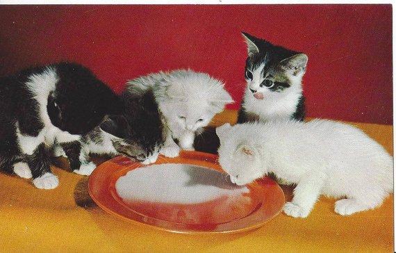 Vintage Alfred Mainzer 807 Four Kittens Drinking Milk Postcard