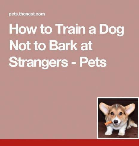 Stop dog barking sound mp3 and wellness dog training treats