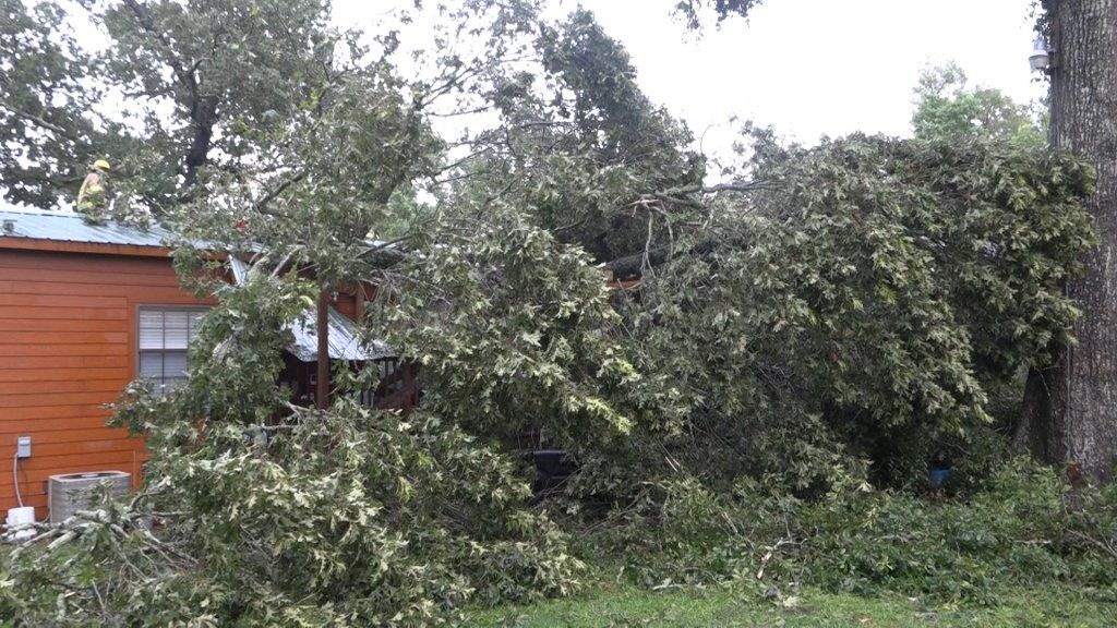 Wind Topples Tree Into Porter Home Barely Missing Children Montgomery County Police Reporter Montgomery County Police Plants Tree