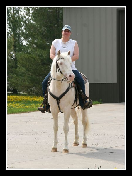 Sundancer's Dorado De vez My gorgeous Cremello stallion