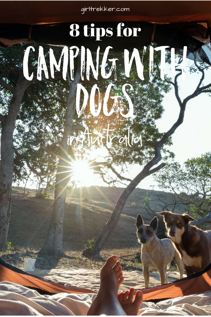 8 tips for Camping with Dogs in Australia (With images