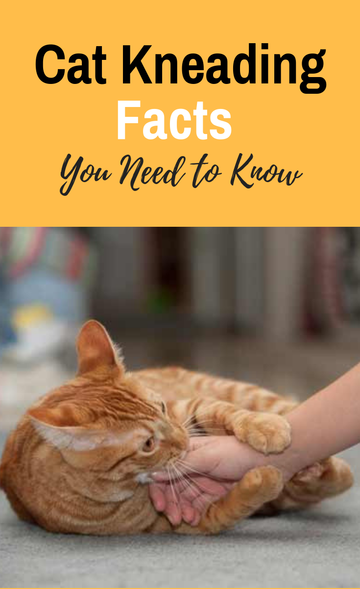 Cat Kneading Facts You Need To Know Cat Behavior Cat Biting
