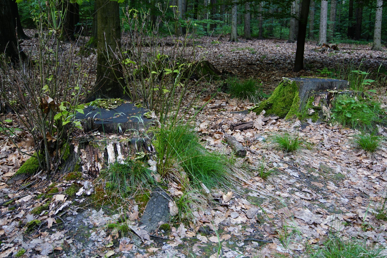 Near Wehlen \ Sächsische Schweiz in Germany.