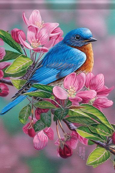 Garden Sapphire Garden Flag Bird Art Birds Painting Bird Drawings