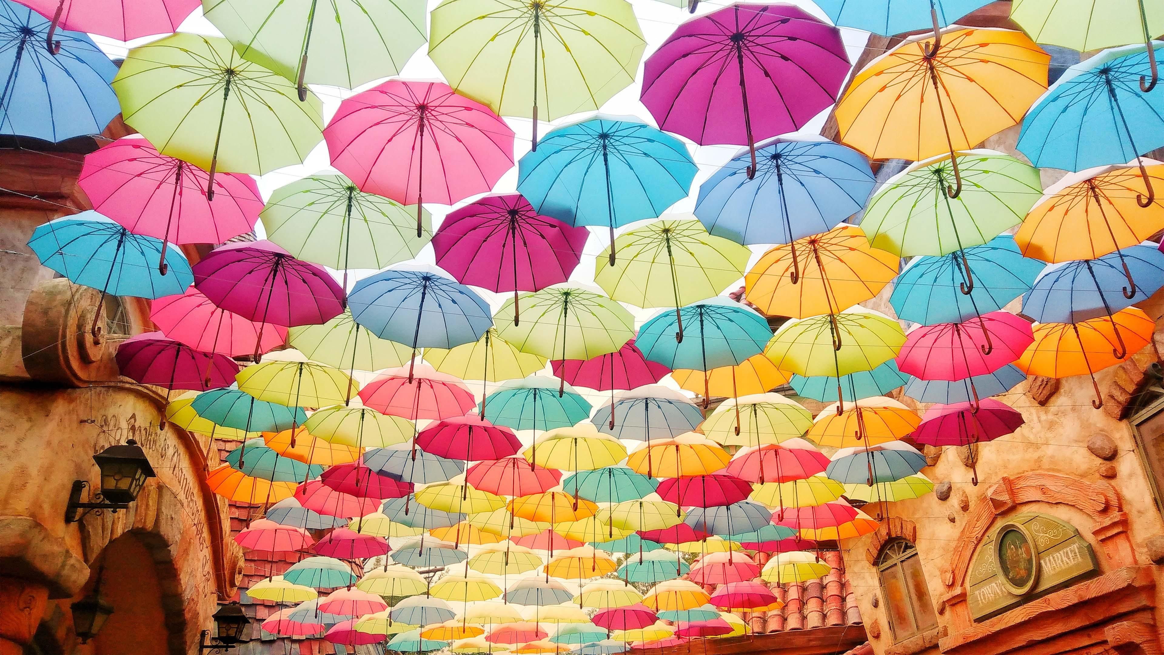 Umbrella Flowers Are In Full Bloom In The Blue Sky Anime Flower Blue Sky Wallpaper Flower Wallpaper
