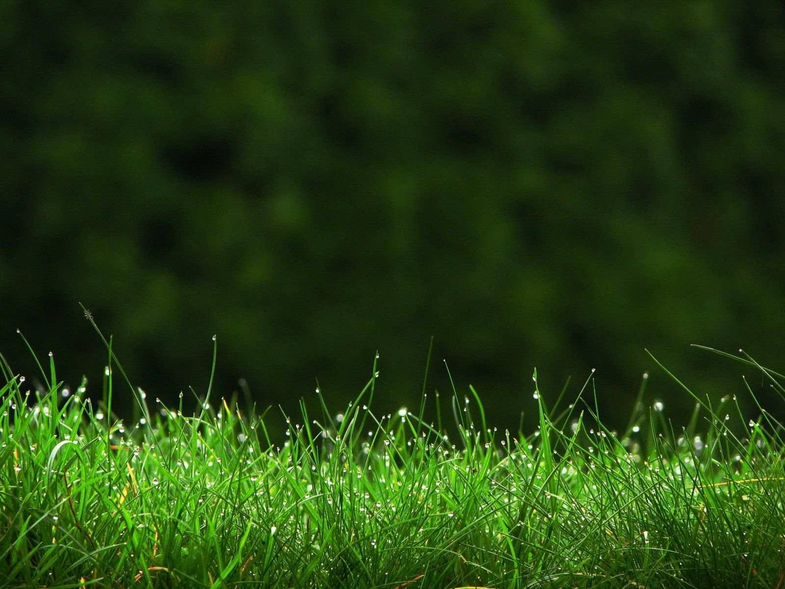 Nature Wallpapers / Grass Wallpapers Download HD Wallpapers and ...
