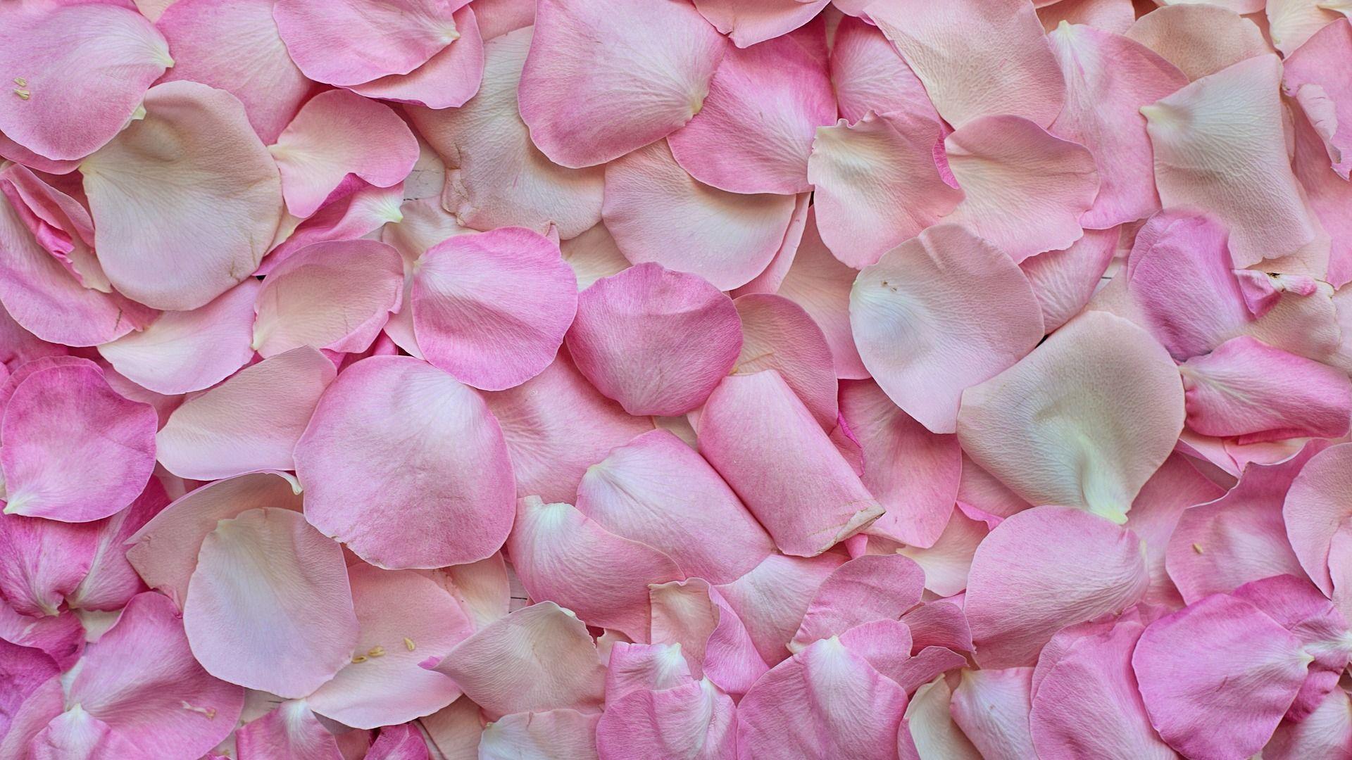 Pin On Rose Wallpaper Hd Flower petals wallpaper hd