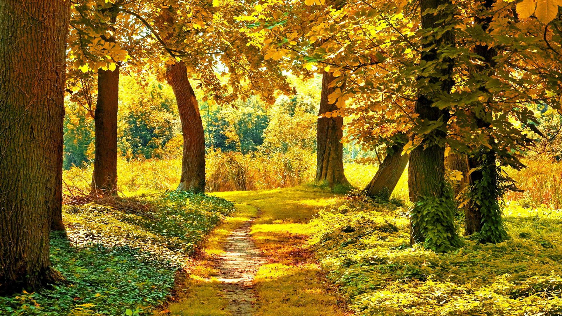 21 best hd autumn landscape wallpapers feelgrph
