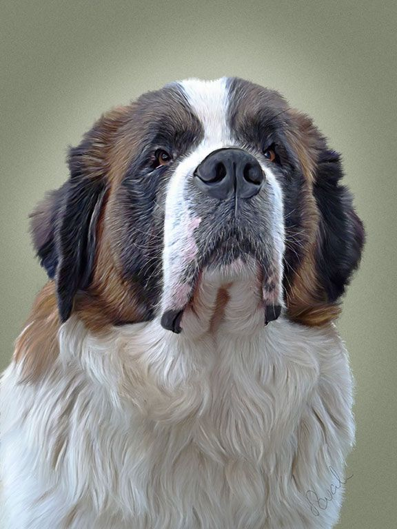 how to draw and paint a saint bernard google search cute pics