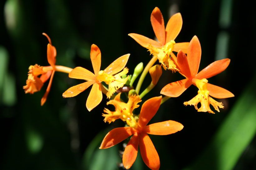 Comment Soigner Une Orchidee Avec Images Rempoter Orchidee