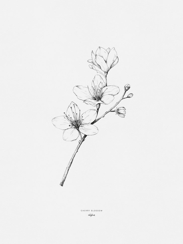 Cherry Blossom Hand Drawn Illustration By Inkylines These Flowers Also Known As Sakura In Japan Blossom Tattoo Cherry Blossom Drawing Cherry Blossom Tattoo
