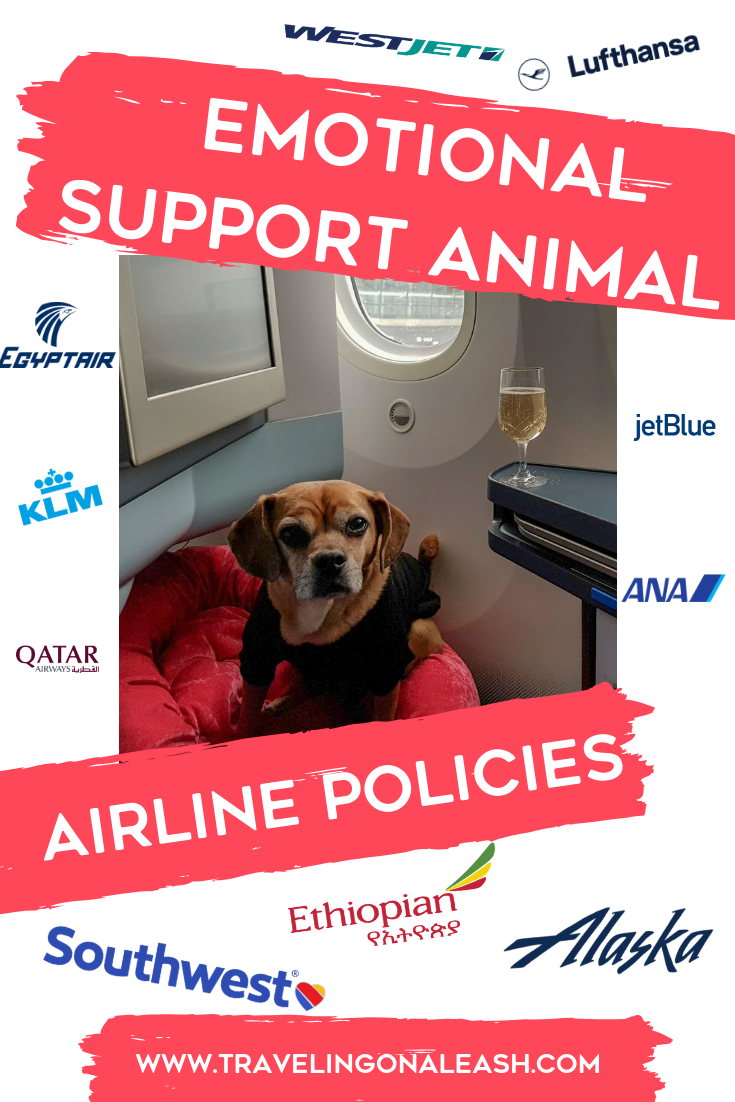 Complete Guide to Airline Policies for Emotional Support