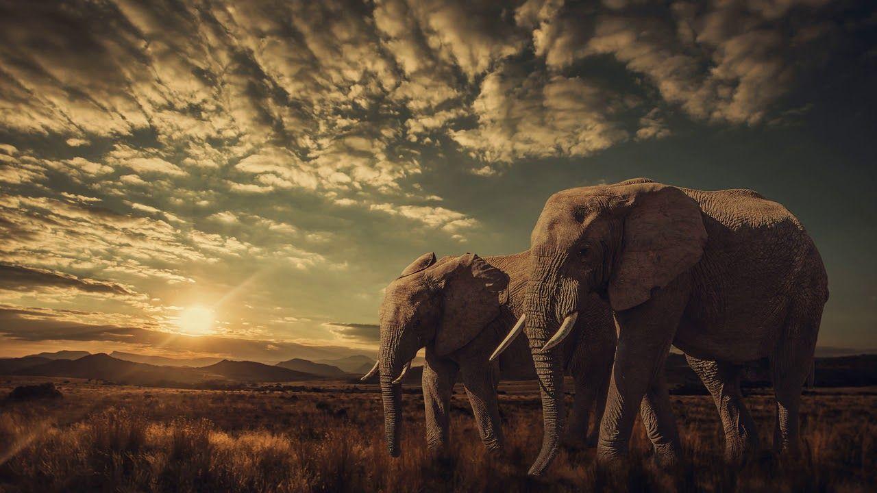 Картинки африка большого разрешения