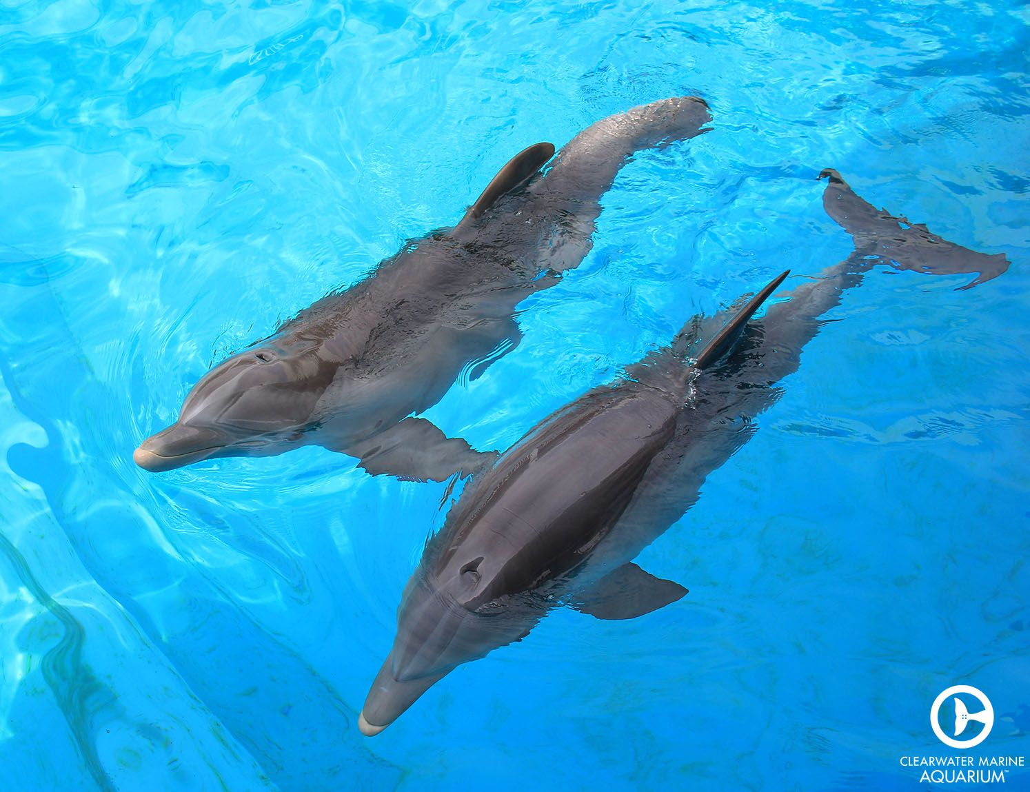 Meet Winter the dolphin and Hope the dolphin, the new ...