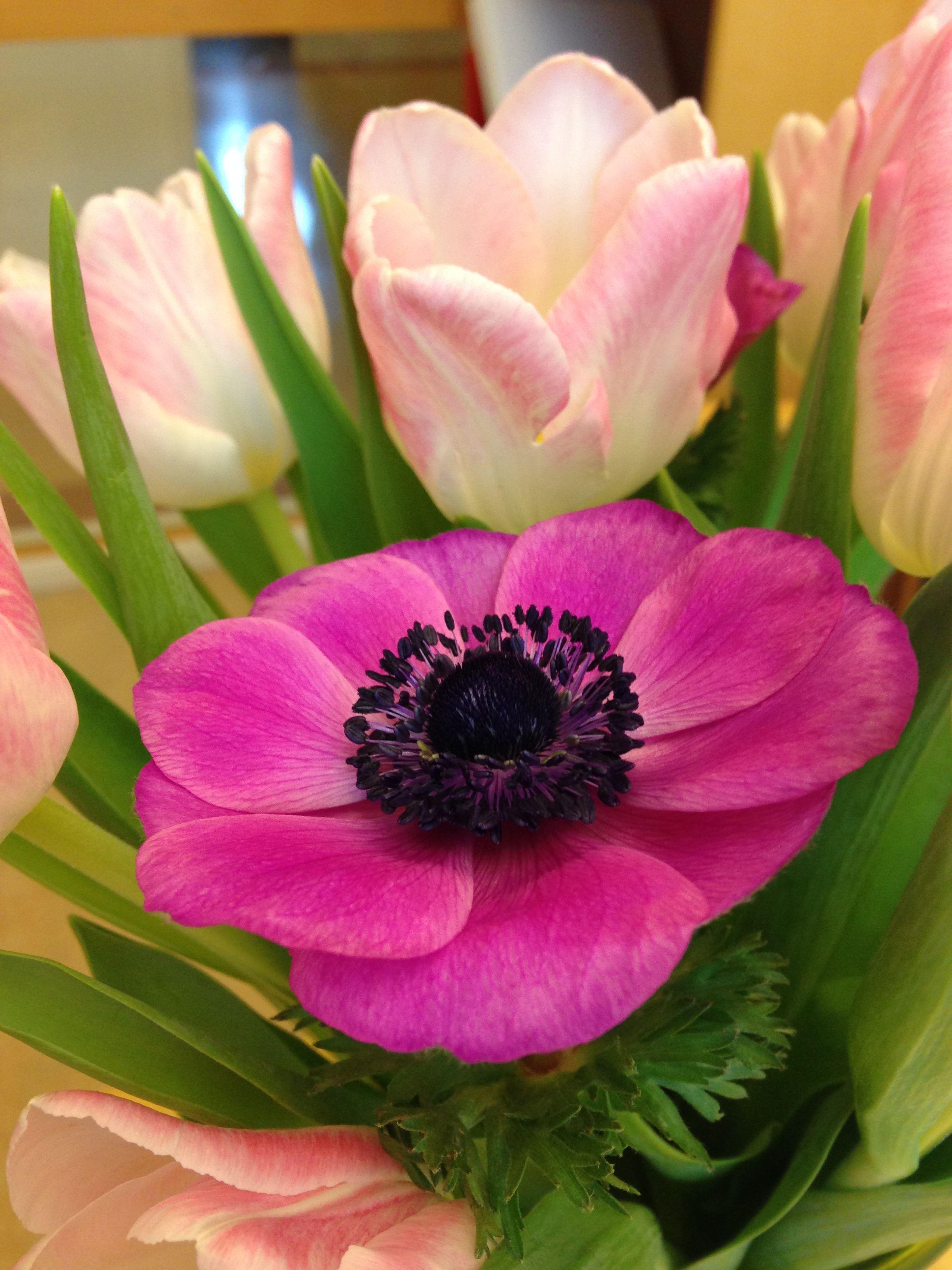 Épinglé par martine mailloux sur fleurs Fleurs