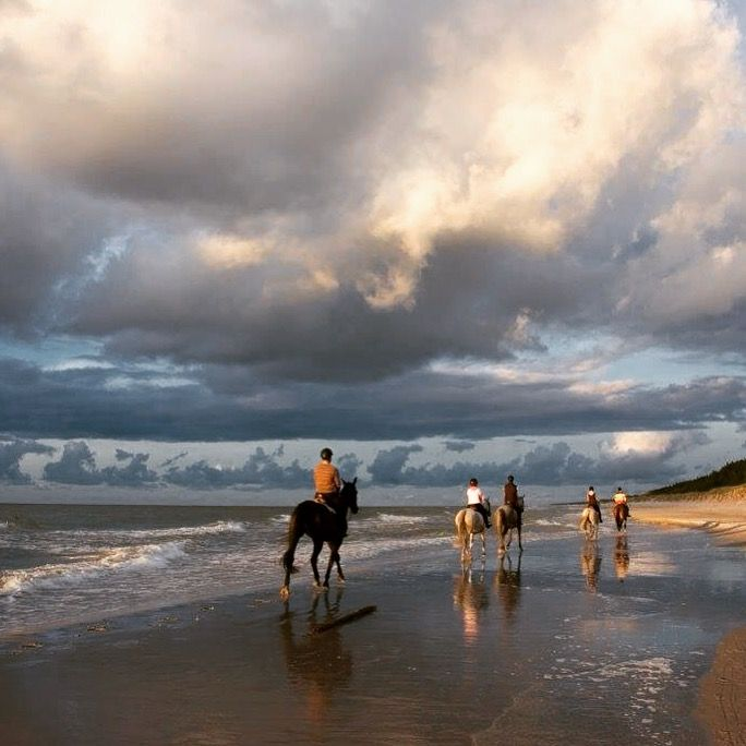 Beach Rides, Caribbean Horses, Horse Love #HorseColicSymptomsFree http://www.loveyour.horse