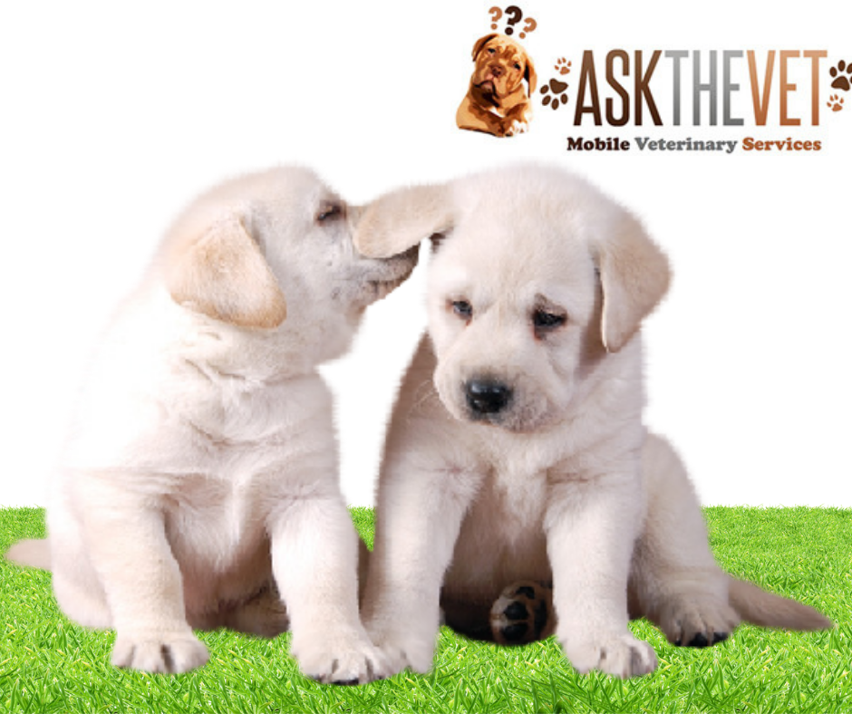 Avail pet health care services at Kennesaw, We