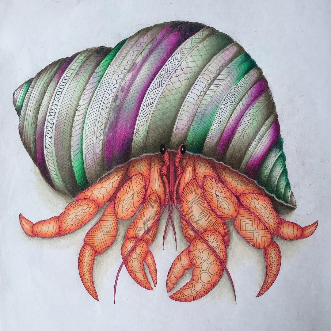 Helpthehermit Milliemarotta Curiouscreaturesprismacolorpencils Mcs Uk