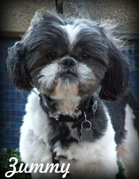 Adopt Zummy On Pets Animals Adoption