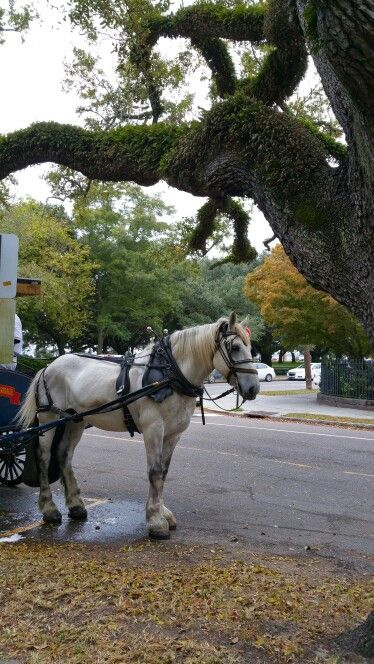 #SC, #carriage ride, # horse relieving