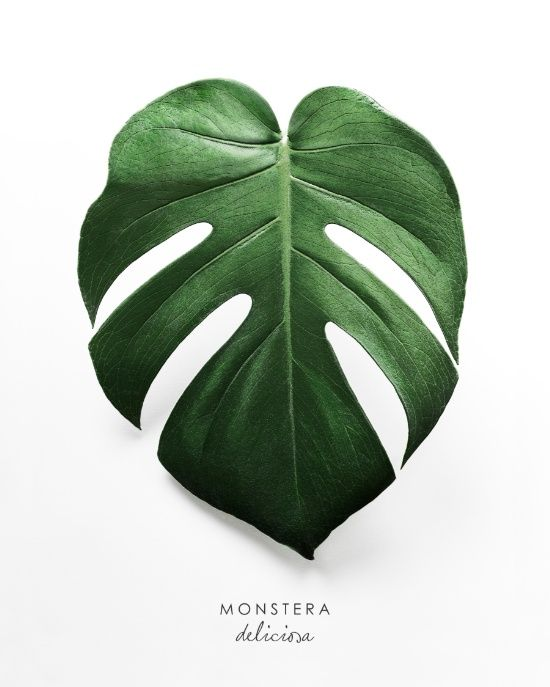 Watercolor Green Plants Monstera Nature Posters And Prints: Monstera Leaf Art Print Monstera Deliciosa Poster
