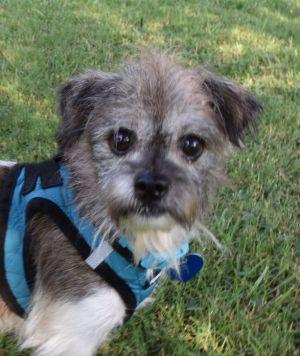 Adopt Skip On Petfinder Dog Adoption Dogs Help Homeless Pets