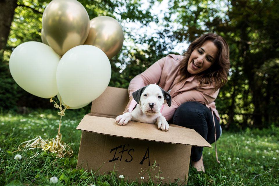 15 Dog Reveals That Are Cuter Than Gender Reveal Parties Huffpost Life Puppy Announcement Puppies Cute Dog Pictures