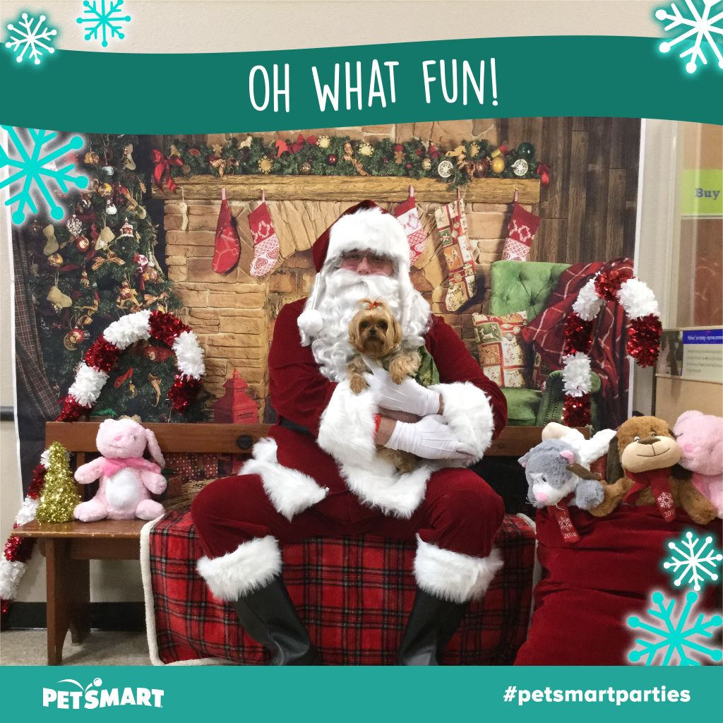 Abby with Santa at Pet Smart | Petsmart, Pets, Animal photo