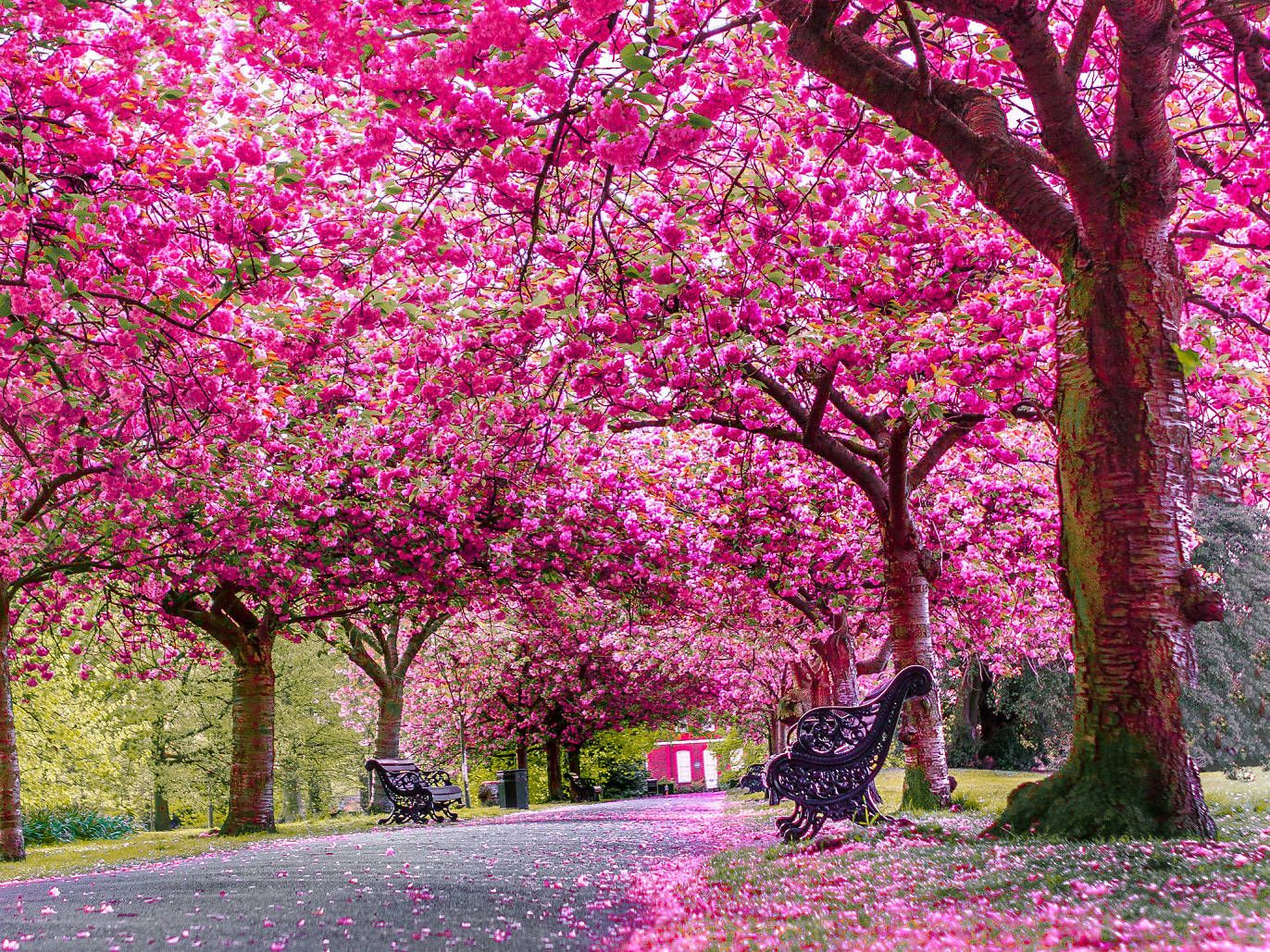 Where To Go See All The Nice Flowers This Spring Beautiful Nature Beautiful Landscapes Beautiful Nature Wallpaper