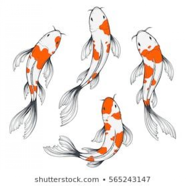 Set Of Four Traditional Japanese Koi Fishes Top View Simple Sketch Style Drawing Of Red And White Fishes Japan Japan In 2020 Koi Art Fish Sketch Koy Fish Drawing