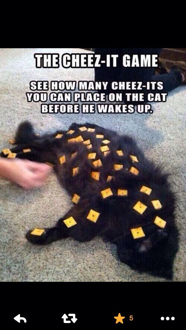 The Cheez It Game Cat