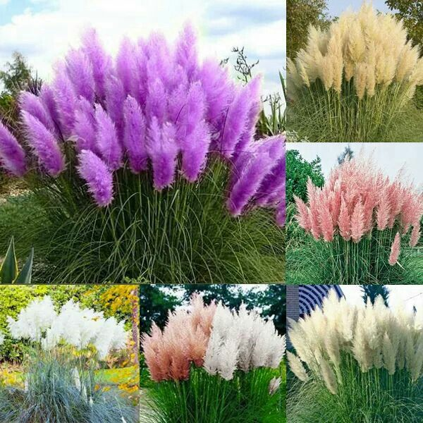 These Look Like Feather Dusters Backyard Plants Planting Flowers Iris Flowers
