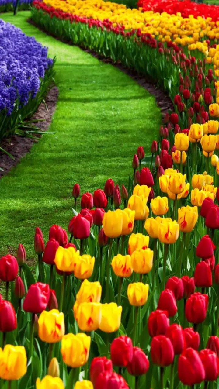 Pin De Luciana Bistrain En Colors Pinterest Natural Flores Y - Flores-bonitas-para-jardin