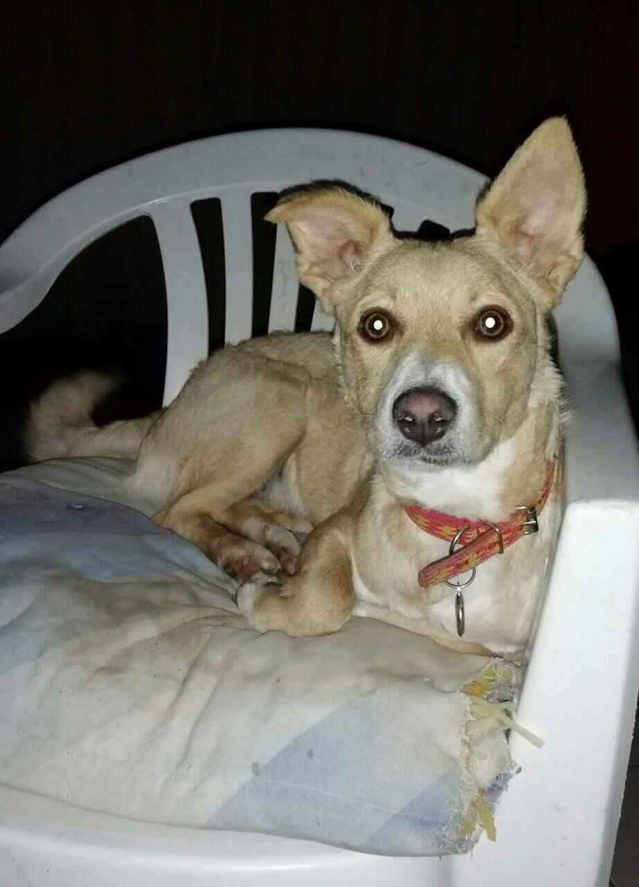 MEET CUPCAKE Dogs, puppies, Dogs, Pet adoption