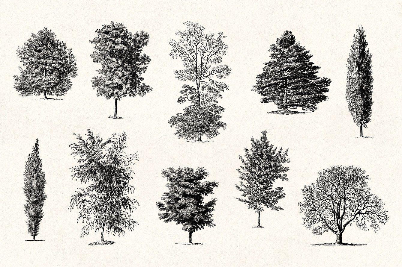 Trees   Vintage Illustrations Set   Vintage illustration ...