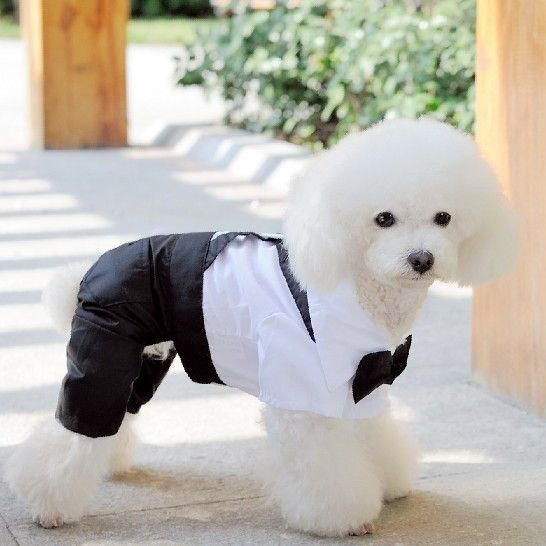 White Black Dog Clothes Dogs Wedding Dresses Puppy Outfit Mascotas