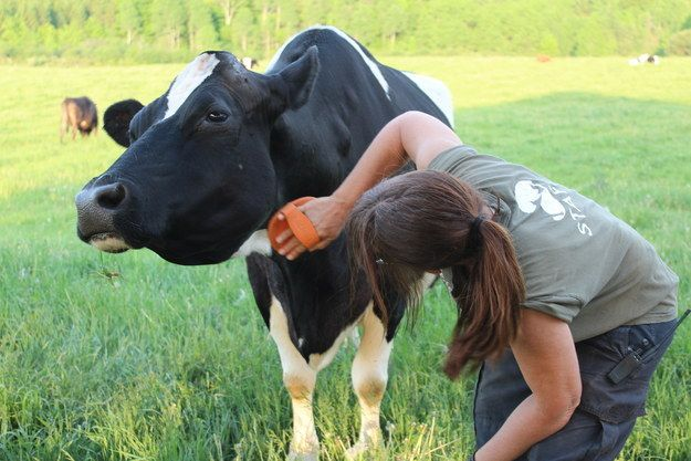42 Incredibly Moving Things You See At Farm Sanctuary Animal Rescue Stories Animals Animal Rescue