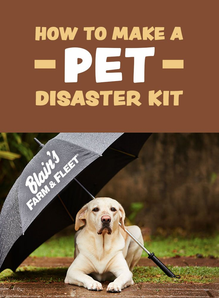 How To Make A Pet Disaster Kit Disaster Kits Pets Disasters