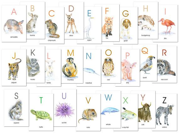 Animal Alphabet Flash Cards Watercolor Animals Abc Watercolor Flash Cards A Z Animal Alphabet Watercolor Animals Animal Flashcards