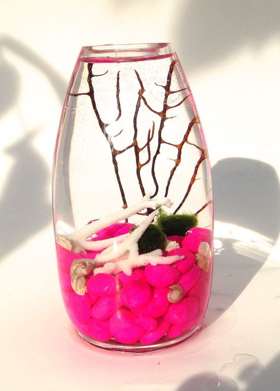 Marimo moss balls in the pink sea// live japanese by EclecticZen, $24.00