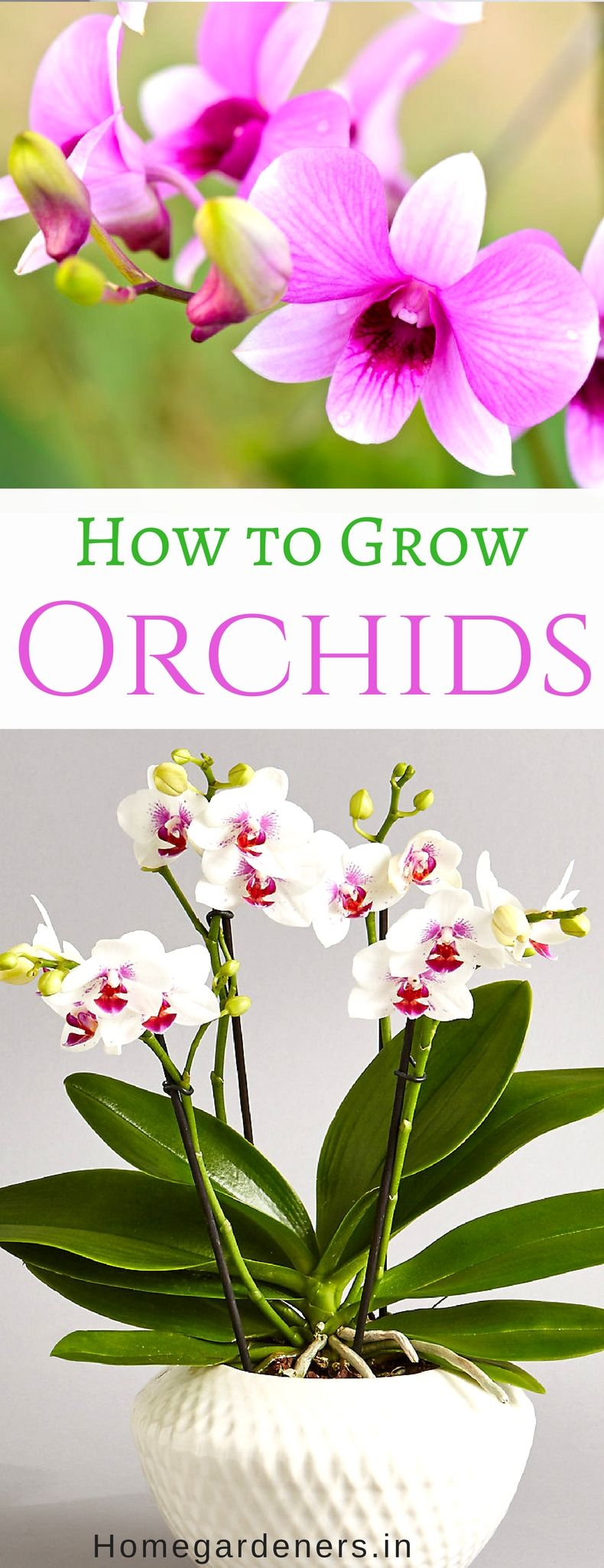 Growing orchids how to care orchid plant indoors and outdoors