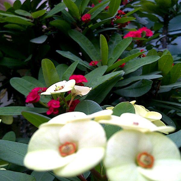 A Flower In Garden