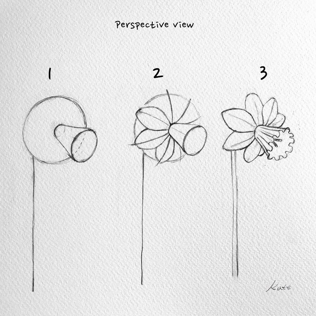 Vse Grani Akvareli On Instagram How To Draw A Daffodil Flower Narcissus Step By Step For Be In 2020 Flower Drawing Tutorials Easy Flower Drawings Flower Drawing