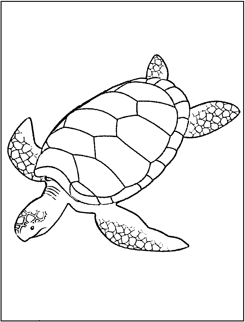 turtles with big shell coloring picture for kids embroidery