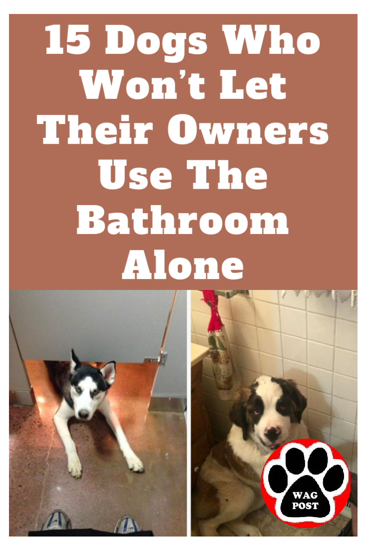 These Dogs Refuse To Let Their Owners Use The Bathroom Alone Dogs Funny Cats And Dogs Funny Dog Pictures