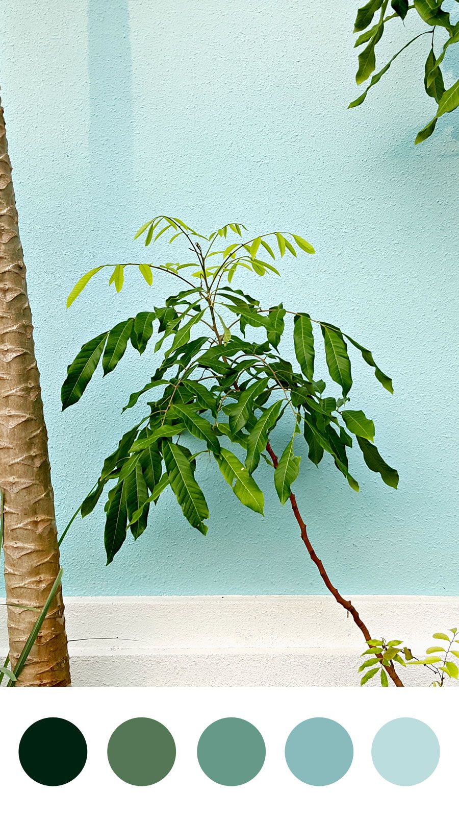Unthinkable House Plant Tree. Happy House Plants Color Palette  Emma Englishby Sky blue powder and pine