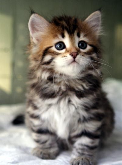 A cute little baby. #adorablekittens