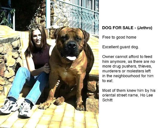 Funny Dog For Sale Ad Spotted On Craigslist But For Real I Would Take Him He S S Cute Dogs For Sale Funny Dogs Huge Dogs